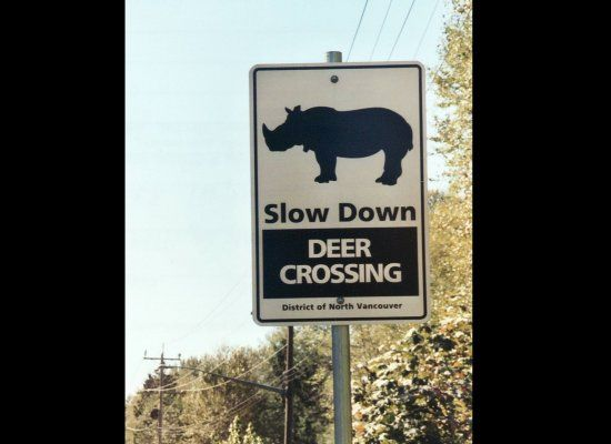 Slow Down Signs >> The 7 Most Bizarre Animal Crossing Signs Ever (PHOTOS) | HuffPost