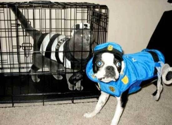Dogs in Pups and Robbers Costume