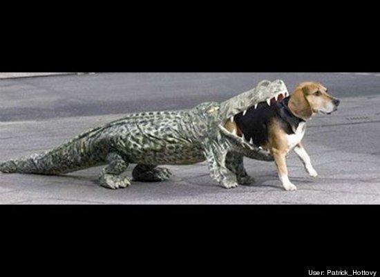 Top 10 Pet Costume Ideas