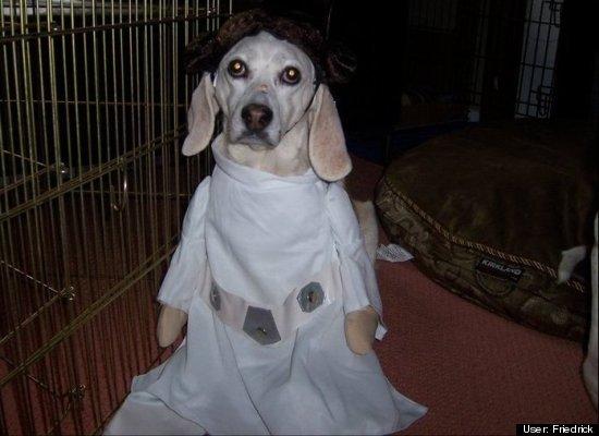 Dog in Star Wars Costume