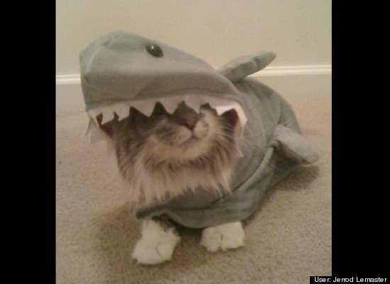Tiger in Shark Costume
