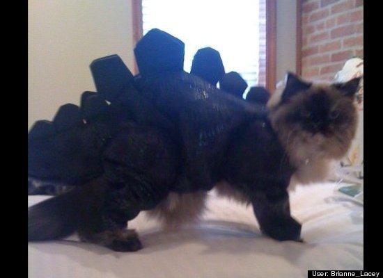 Kitty in Dinosaur Costume