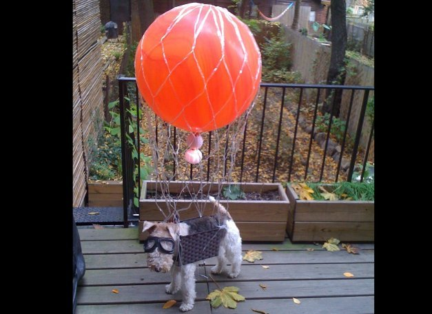 Dog in Hot Air Balloon Costume