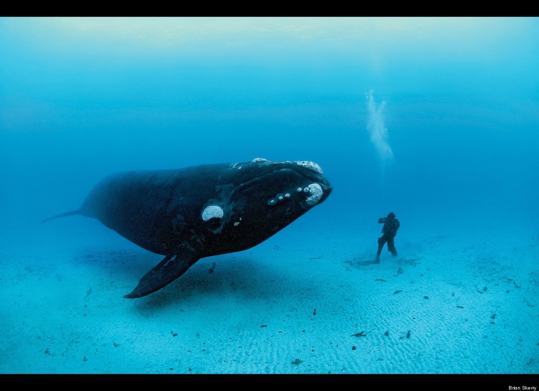 Sharks and seals amazing underwater images from national for Amazing ocean images