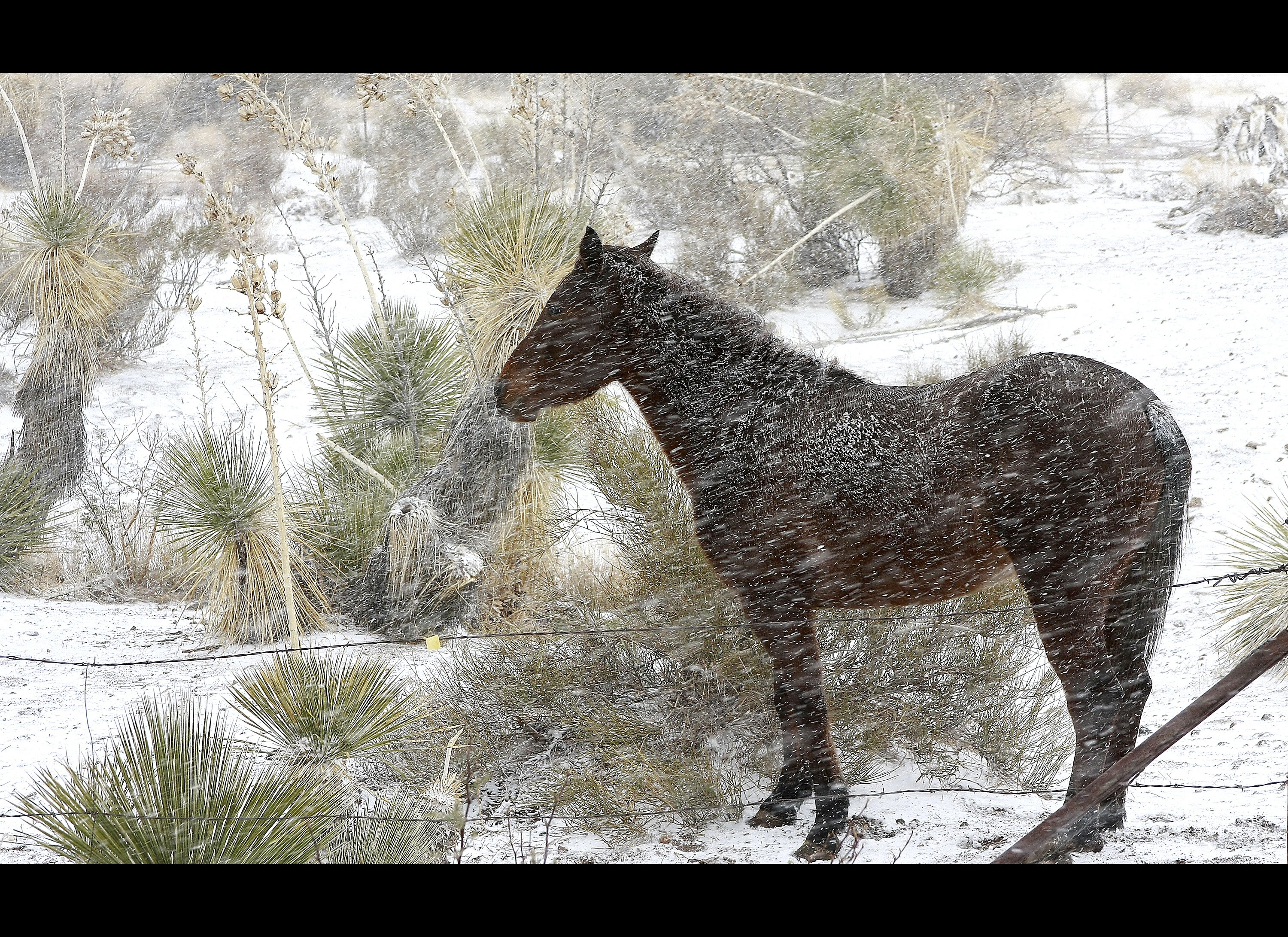 NEW MEXICO. A horse stands in the intense wind and snow Monday, Dec., 5, ...