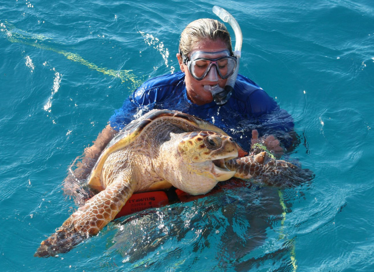 Loggerhead sea turtle released after angry puffer fish for Puffer fish diet