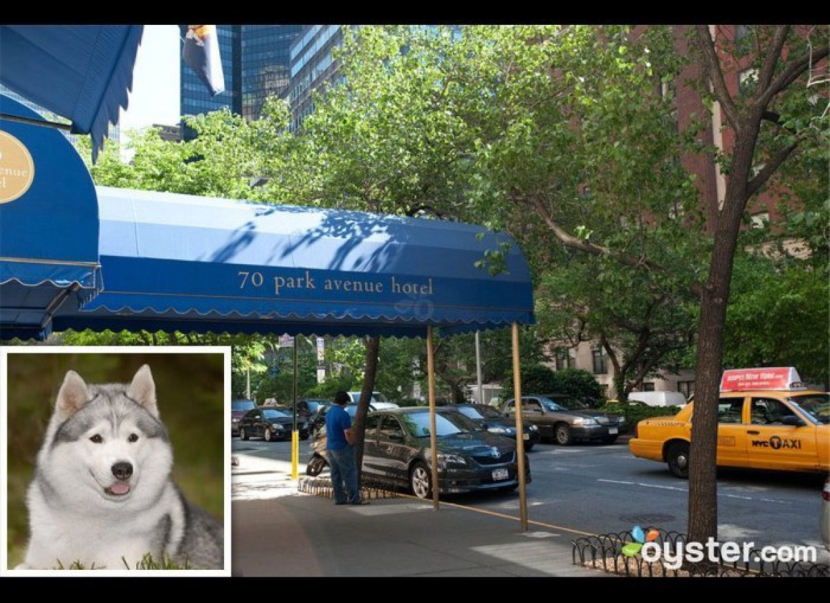 Westminster kennel club dog show pet friendly hotels in for New york pet friendly hotels