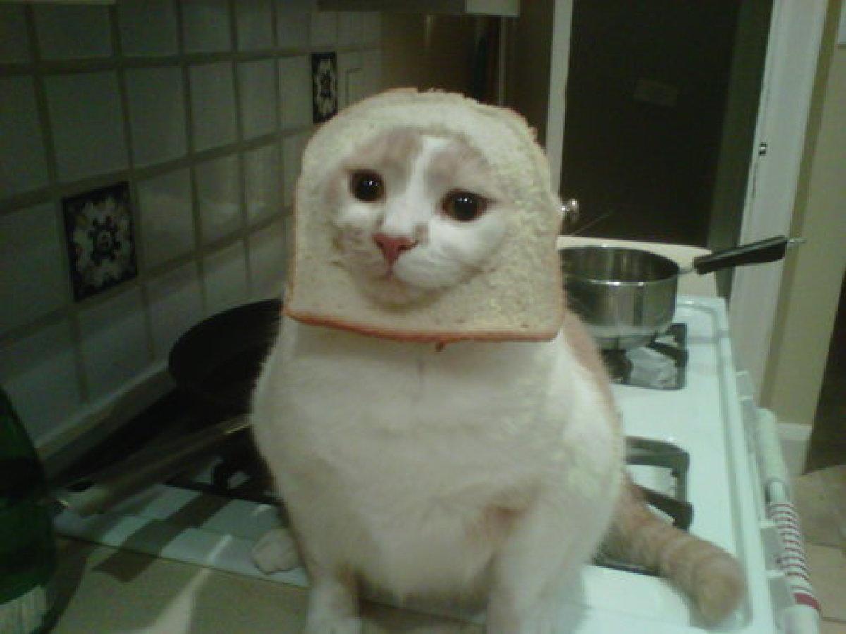 cat scan technologist training