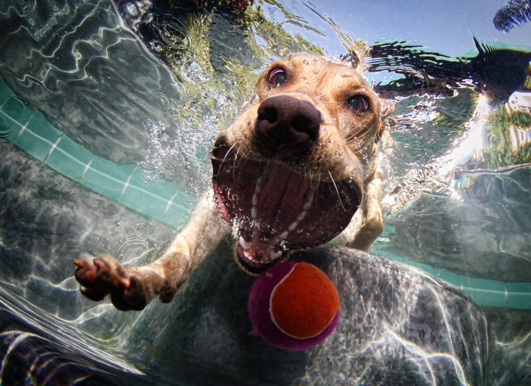 Dog fetching ball underwater