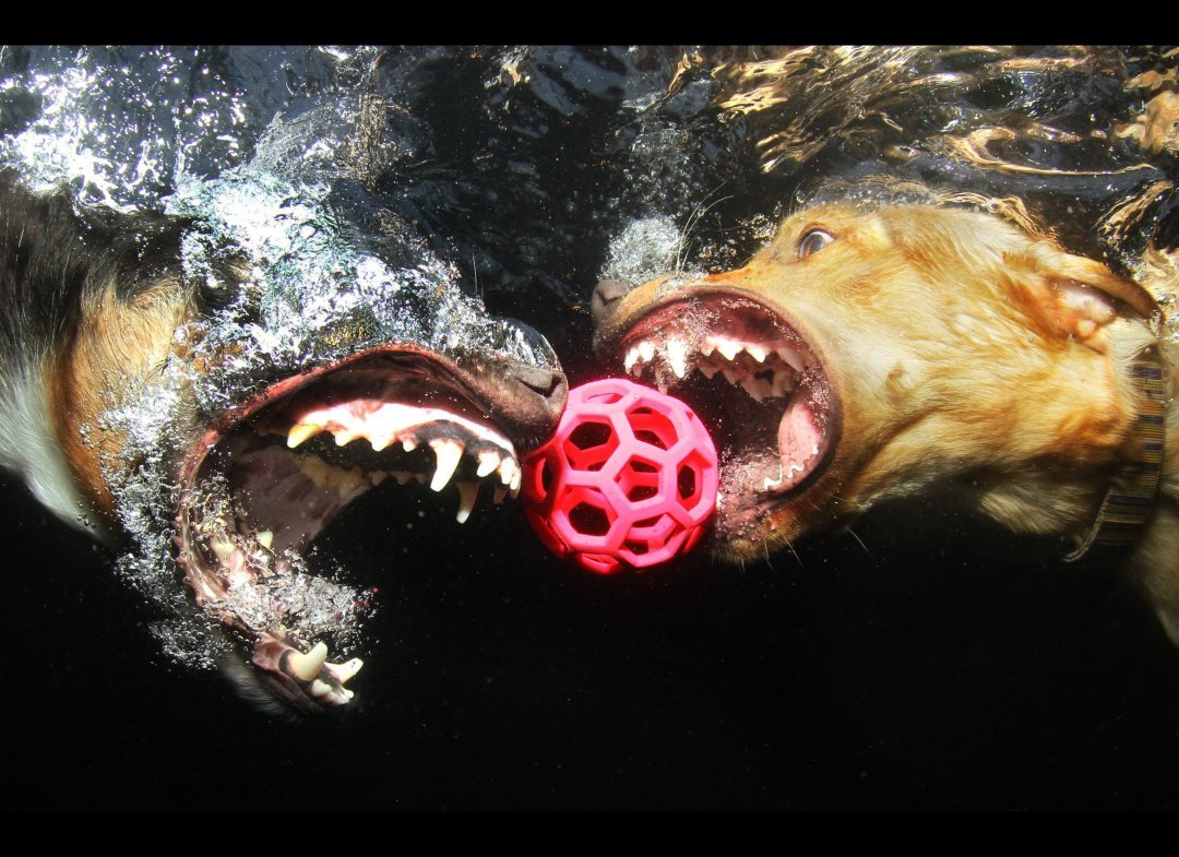 Underwater Swimming Dog Pictures Go Viral Animals-Pets
