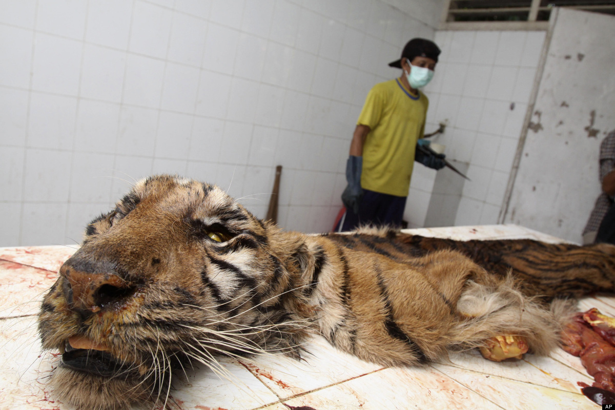 Animal Cruelty Quotes Indonesia's Largest Zoo Accused Of Animal Abuse  Palm Trees