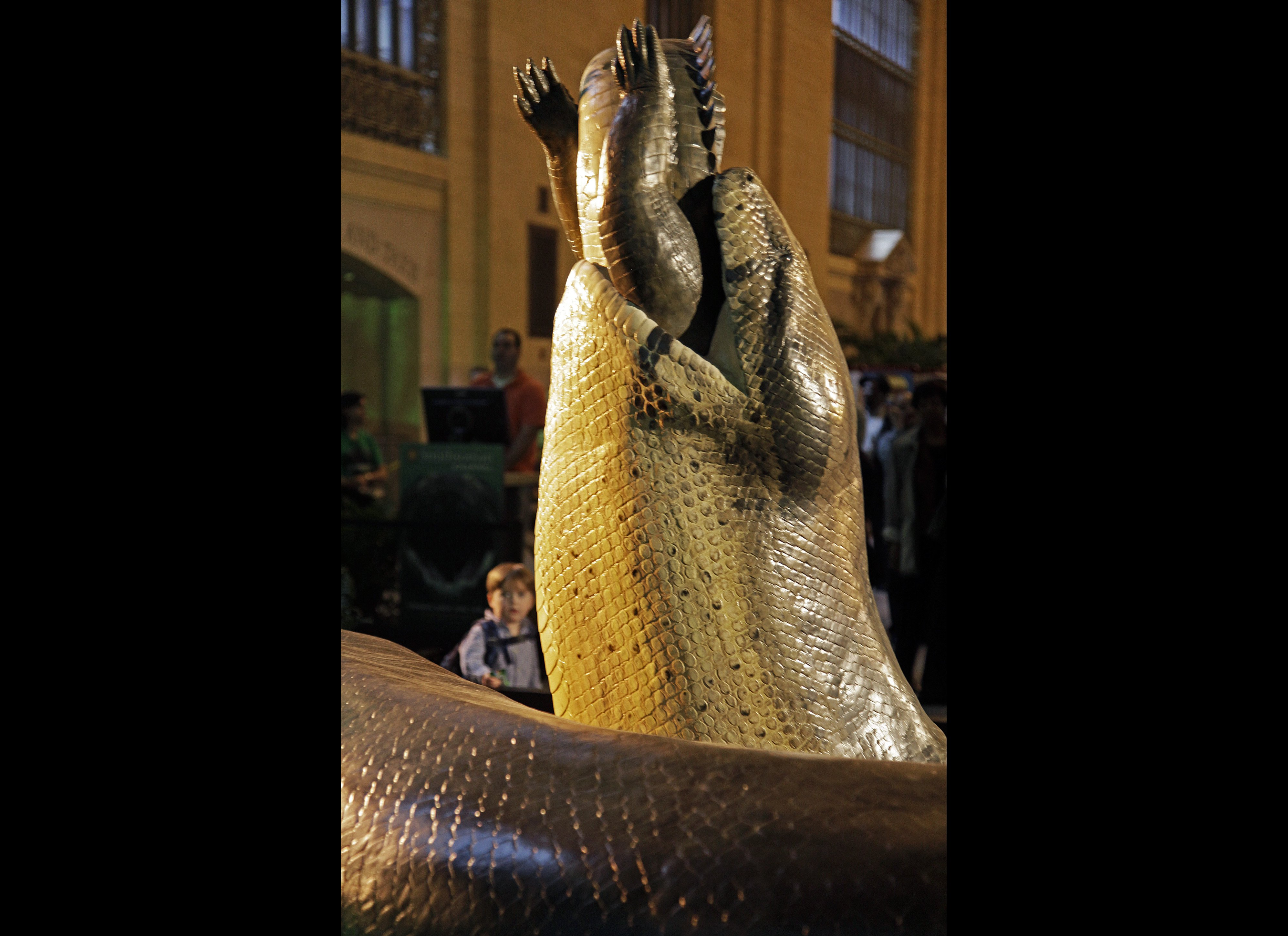 Biggest Snake In The World Ever Recorded The world's largest snake,