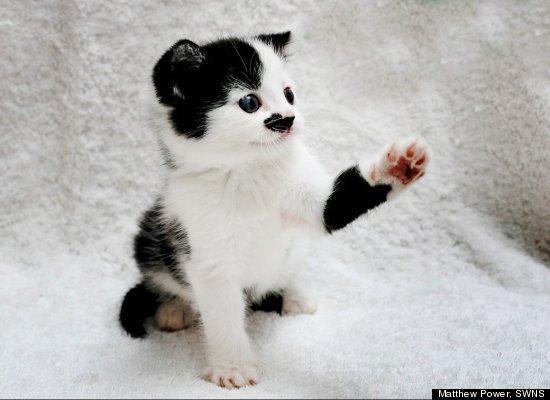 Το γατάκι που μοιάζει στον Χίτλερ...