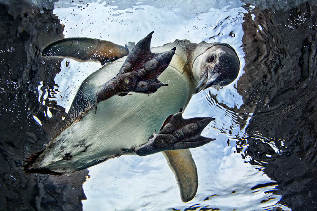 Wiinterrr 39 S Day Images Of The Day Aquarium Of The