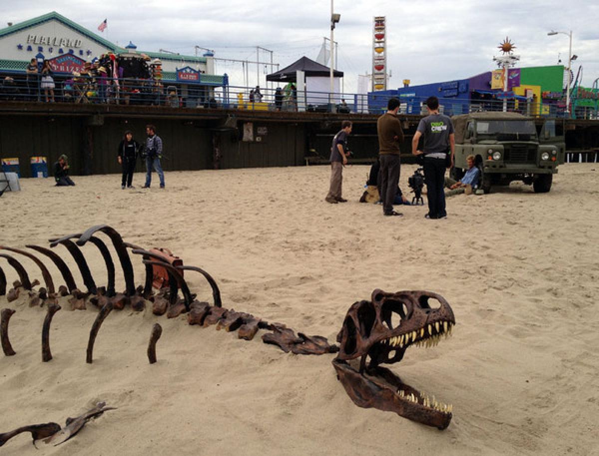Dino Bones Are Plentiful In Alberta Canada Photos