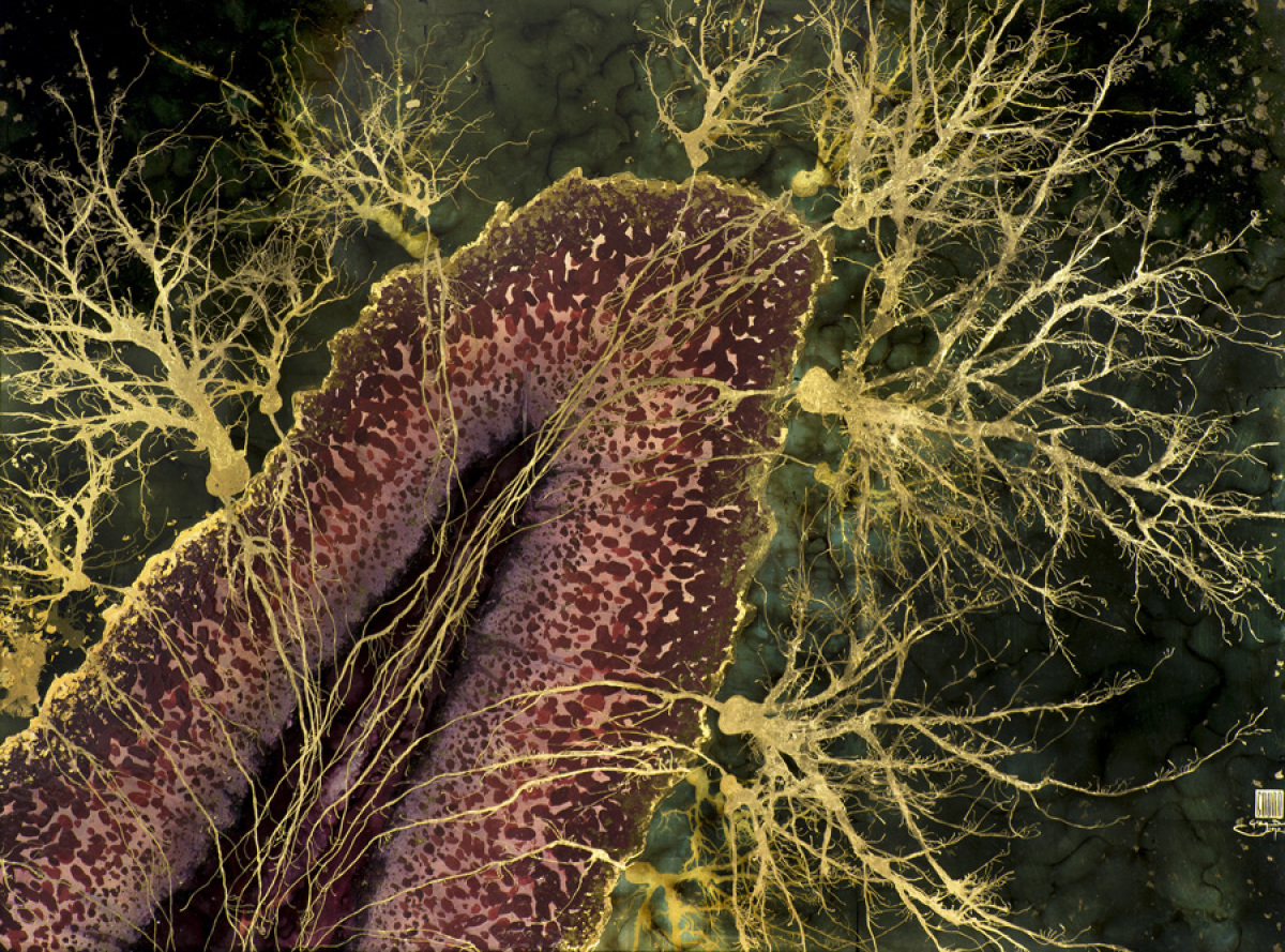 Various Forms of Neurons | ClipArt ETC |Neurons Art
