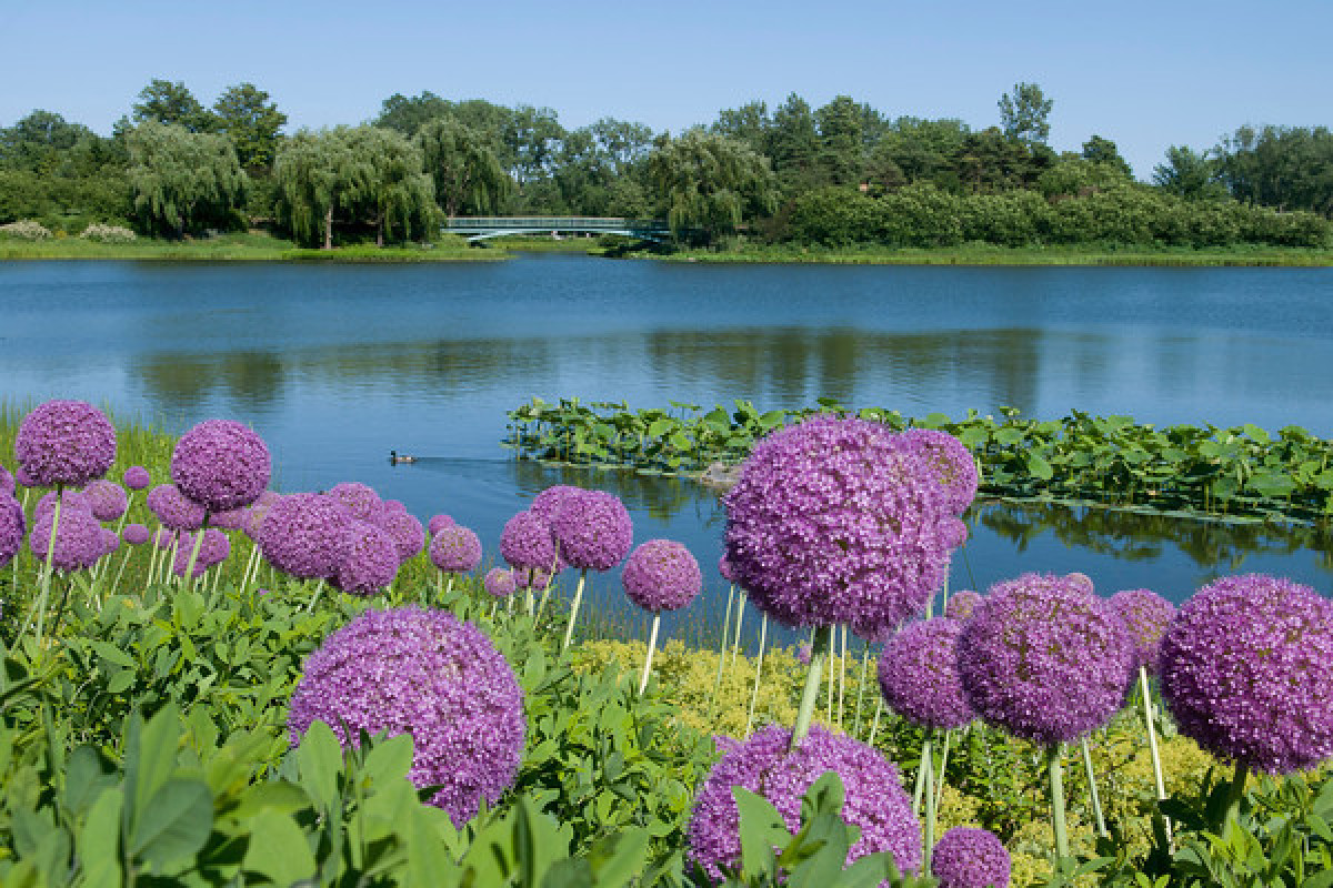 The 10 most beautiful botanical gardens across the united for Most beautiful garden flowers