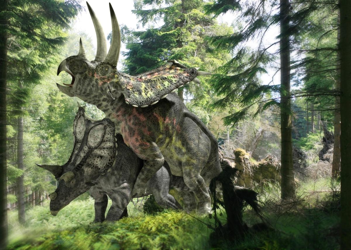 dinoszaurusz pénisz pénisz nyalóka formák