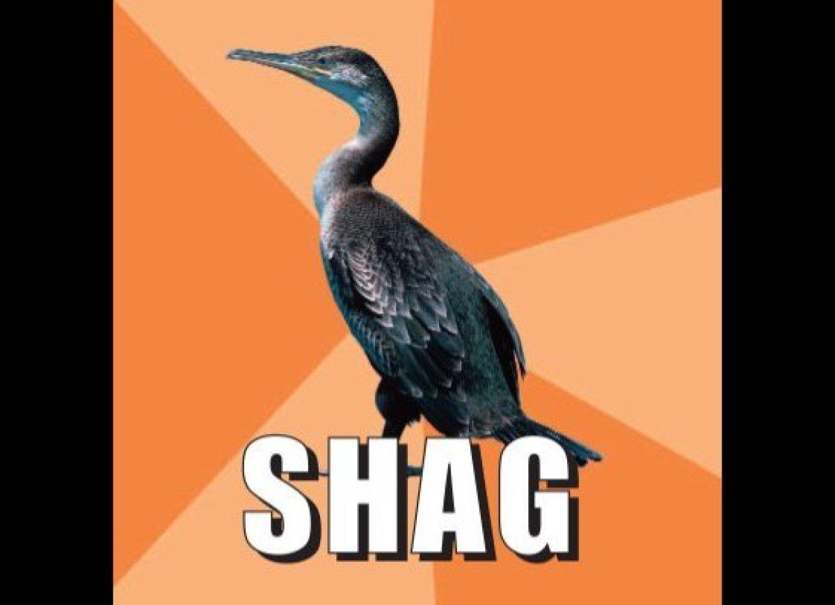 British snapchat bird part 2 7