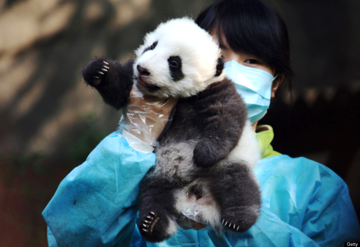 Animal Psychic Sees National Zoo's Baby Panda As 'Being Fine': www.huffingtonpost.com/2013/10/14/animal-psychic-panda_n_4097941.html