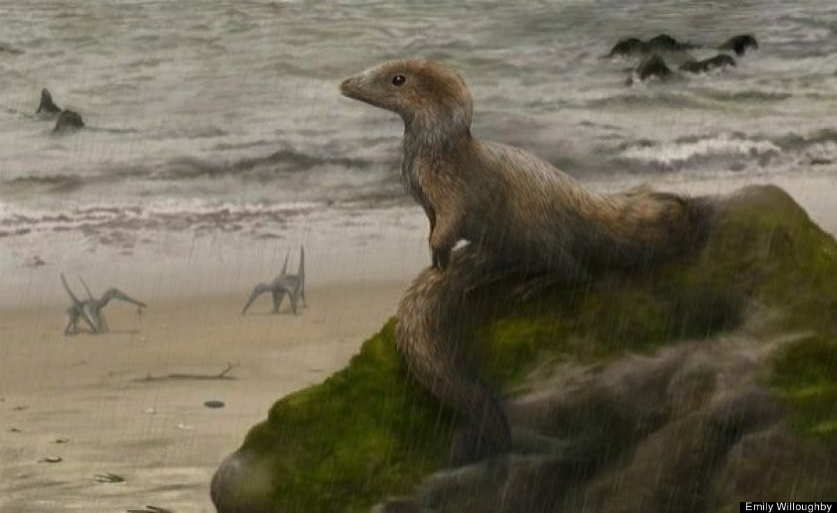 what killed off the dinosaurs The massive extinction that killed off the dinosaurs may have also decimated lizards and snakes, according to new research in the past, researchers believed that the k-t extinction, which occurred around 65 million years ago, wiped out dinosaurs, but mostly spared lizards and snakes.