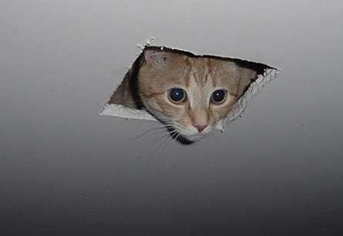 Cat Falling Through Ceiling Gif