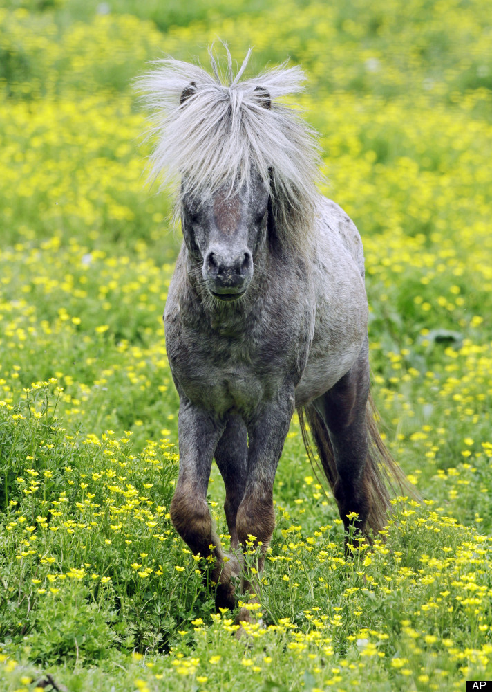 Illinois Mini Horse Service Animal Bill Signed Into Law ...