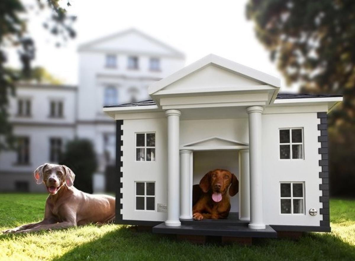 Фото про домики для собак 3