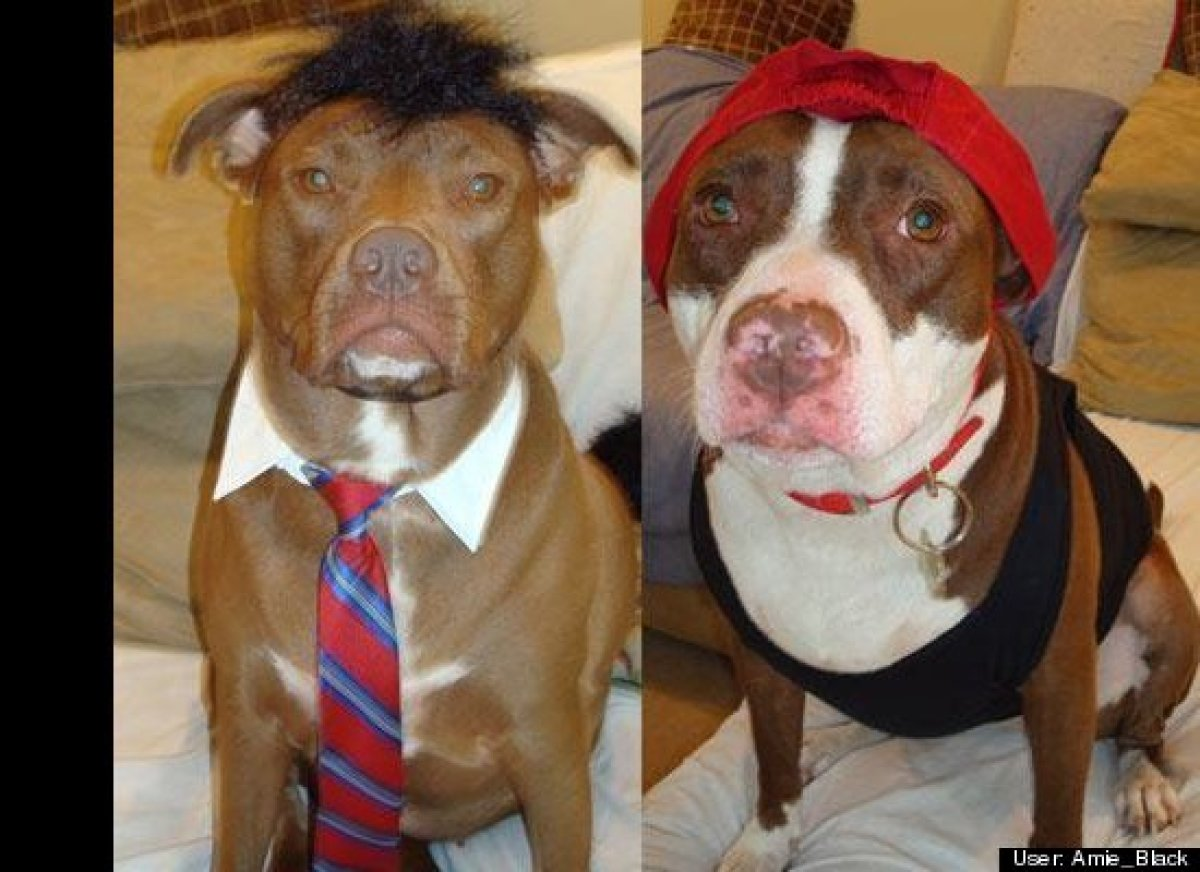 The Funniest Pet Halloween Costumes: Submit Your Own! (PHOTOS ...