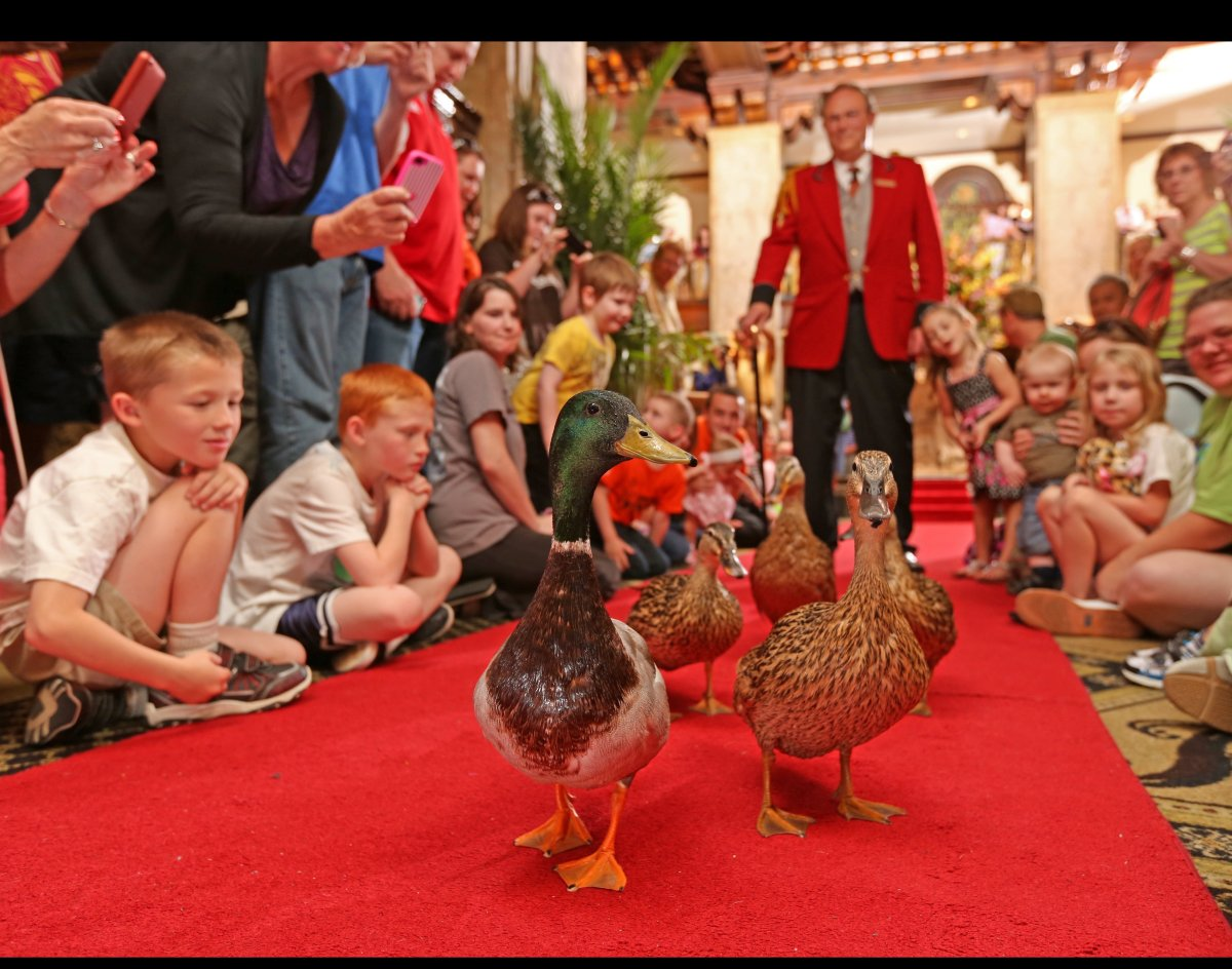 Animal Hotel Hosts Make Visitors Feel At Home Photos