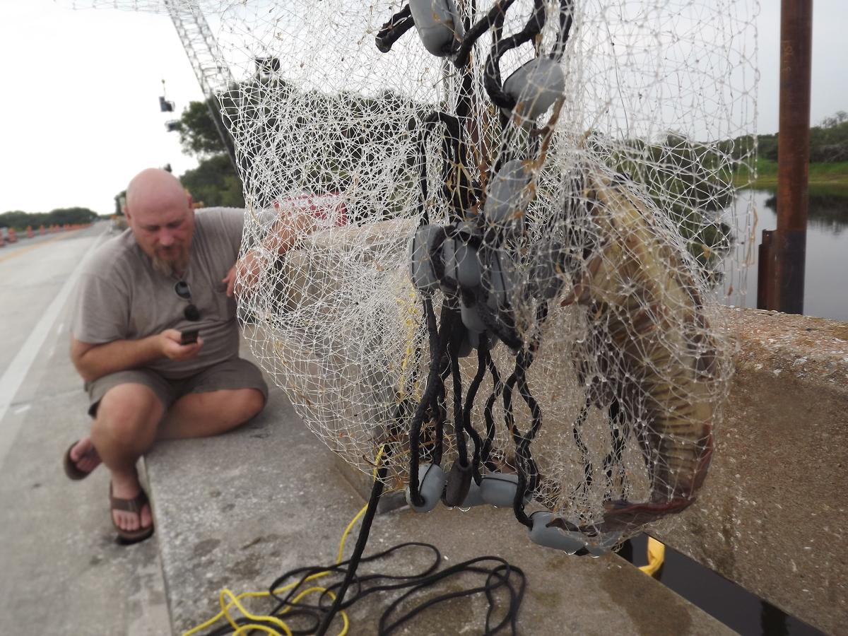 Menangkap Ikan Besar Lagi Untuk Menangkap Ikan