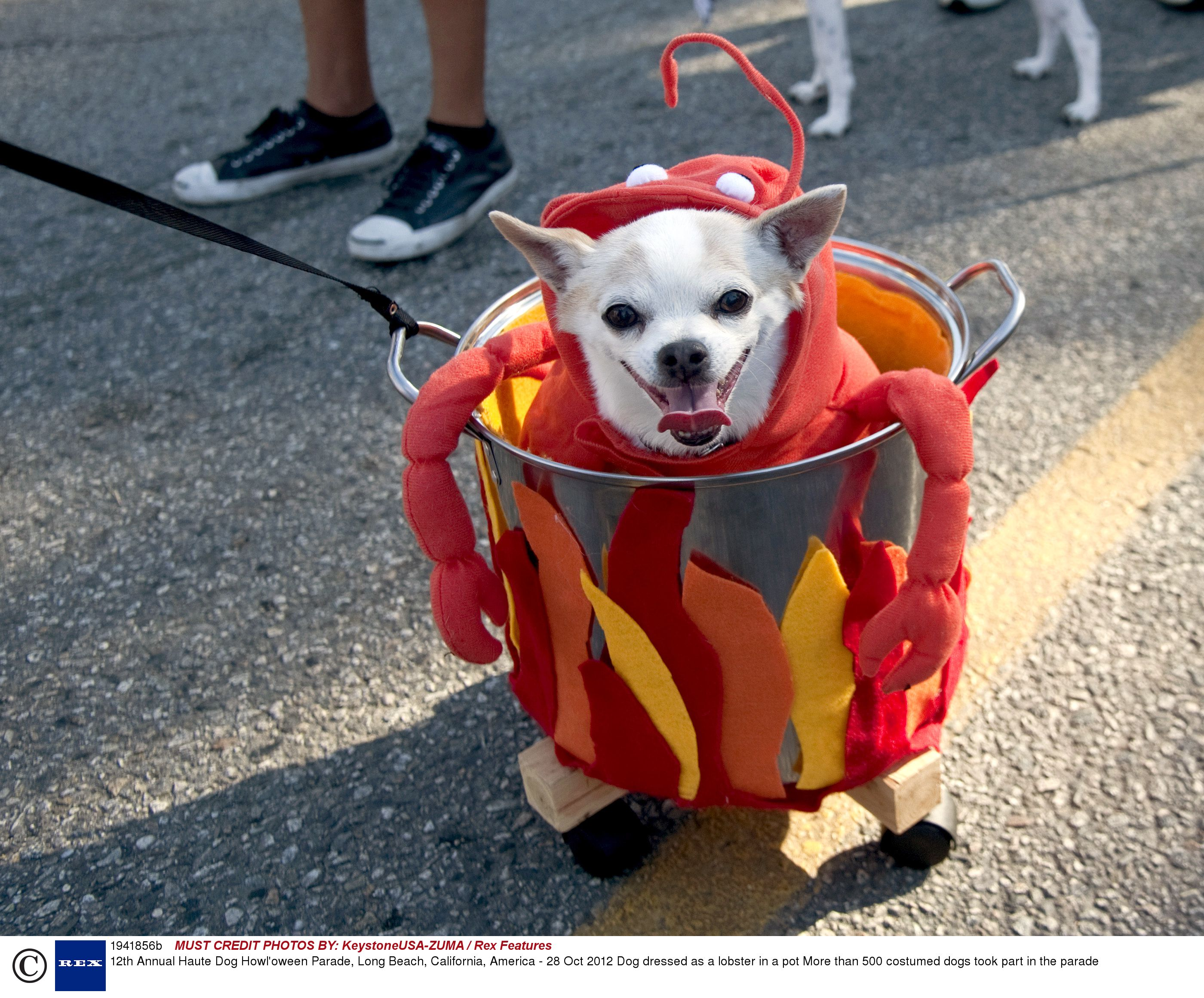 Pitty the Bull Dog Costume PupaRazzi Dog Collection