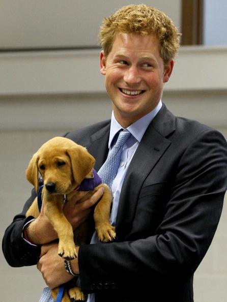 Το σκυλάκι του πρίγκηπα...
