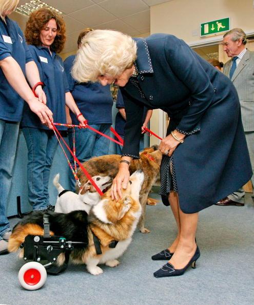 Η Καμίλλα με ασθενείς σκύλους...