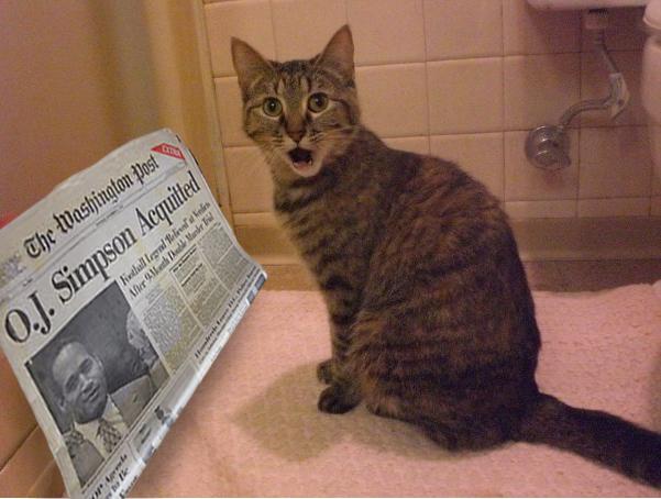 Foto Lucu Ekspresi Kucing Kaget