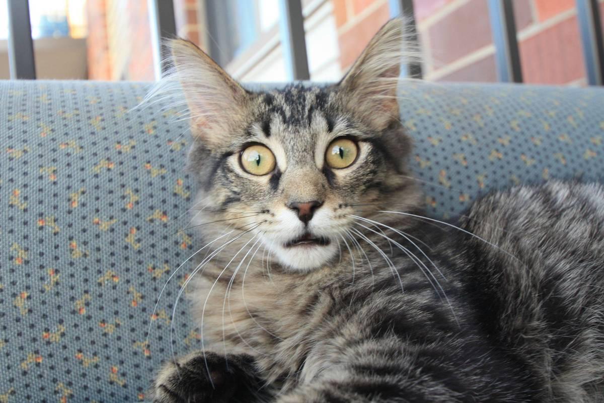 Foto Lucu Ekspresi Kucing Lagi Kaget