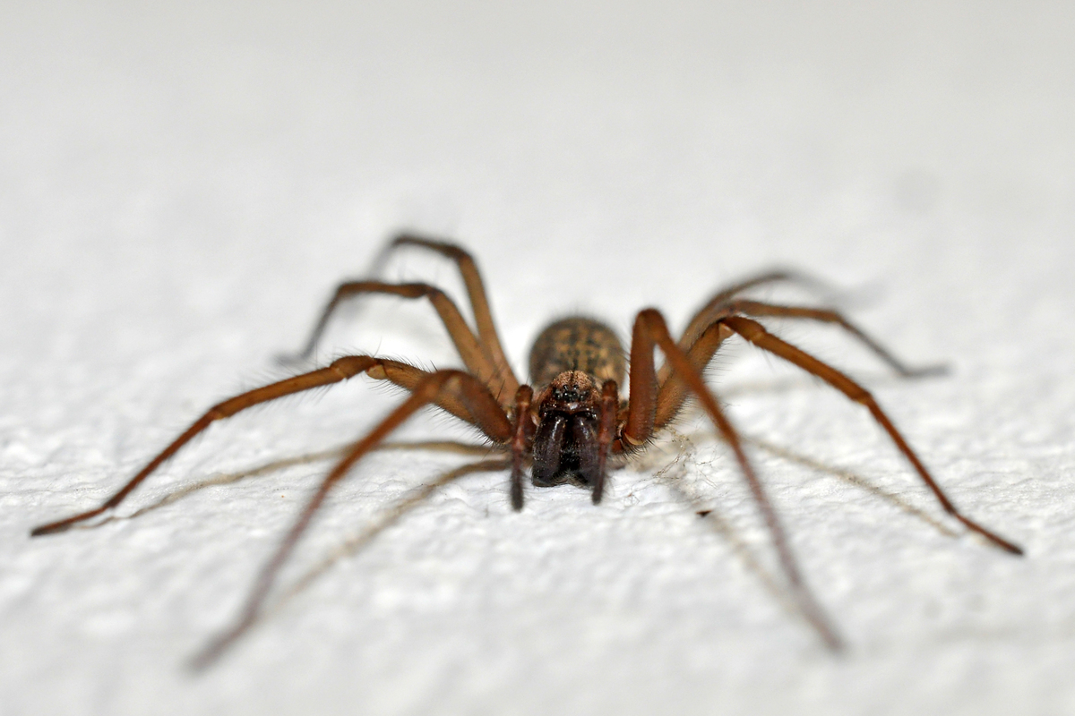 8 Scary Household Bugs We D Never Want To See In Our Homes