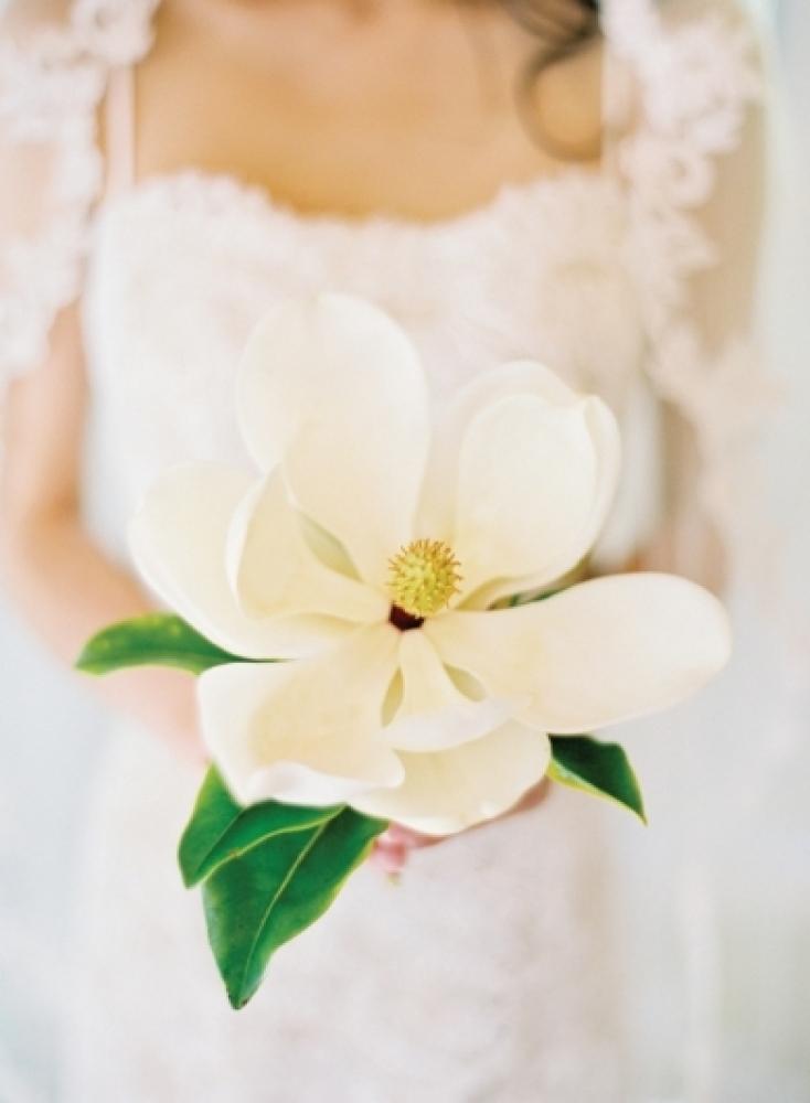 Marvelous Magnolia
