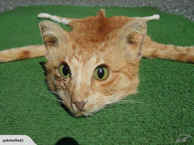 Andrew Lancaster, Taxidermist, Sells Cat Skin Rug On u0026#39;Trade Meu0026#39; Auction Site (PHOTOS) : HuffPost