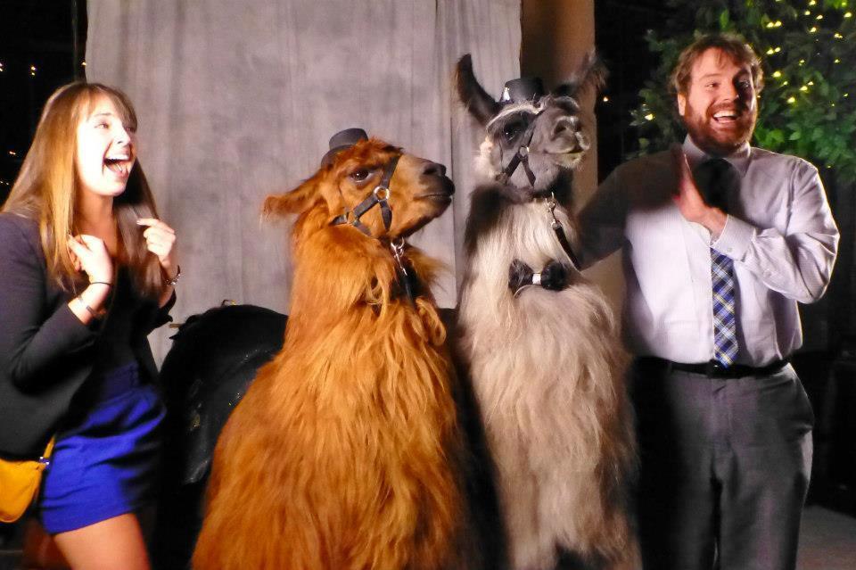 Pet Fashion Show Portland