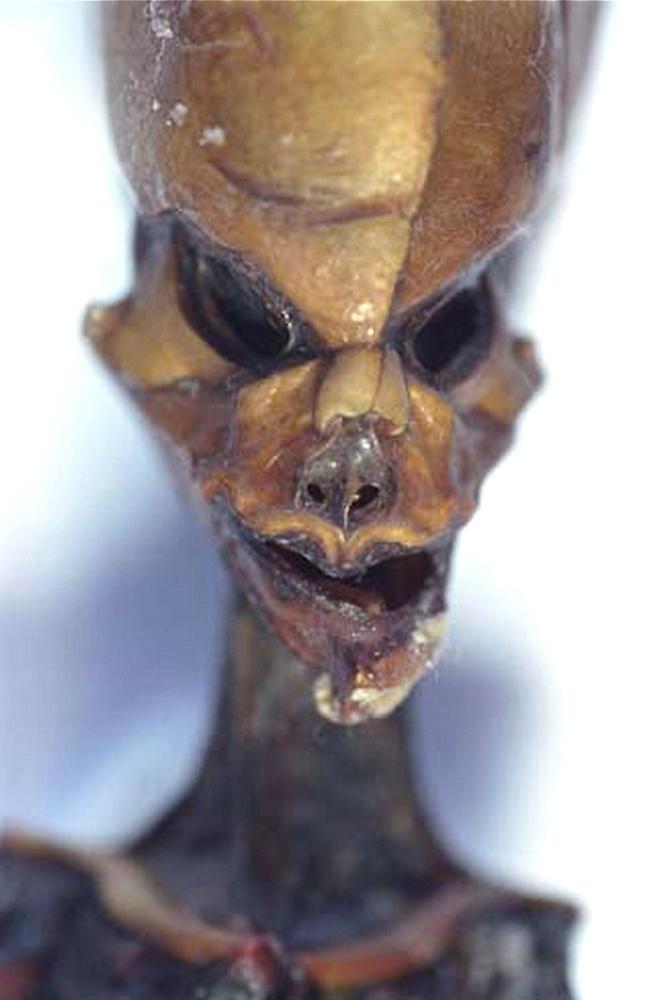 The Atacama Humanoid.