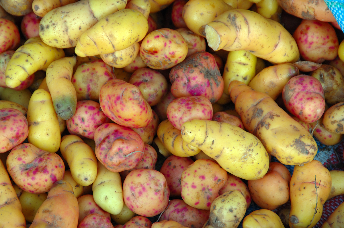Weird Vegetables You've Probably Never Heard Of (PHOTOS ...