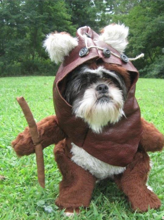 Funny Ewok Dog Costume