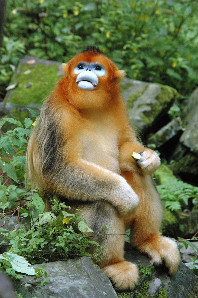 primates in uk laboratories exposed to cruel and
