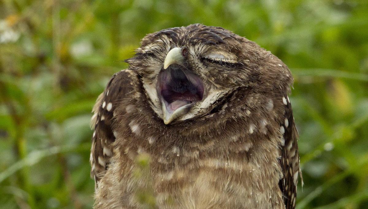 cute owls wallpaper | Wallpaper &amp- Pattern | Pinterest | Owl ...