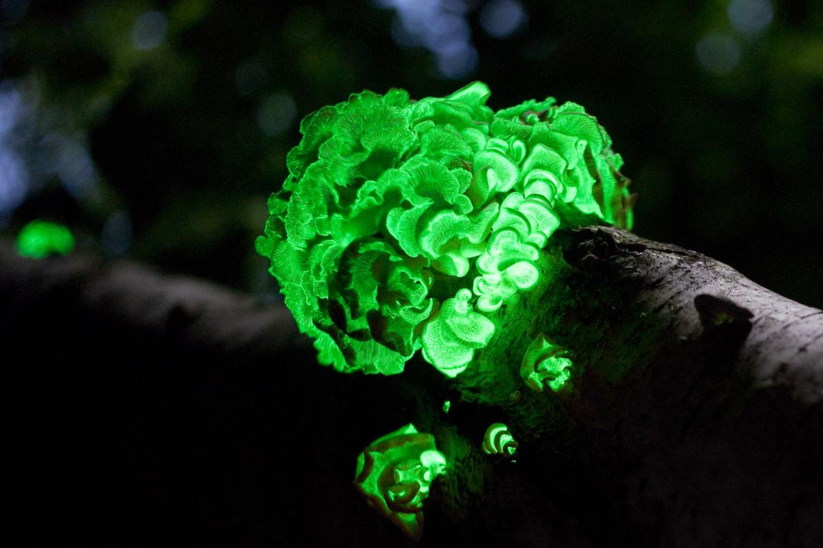 Los fenómenos de la naturaleza más extraños Slide_309650_2725277_free