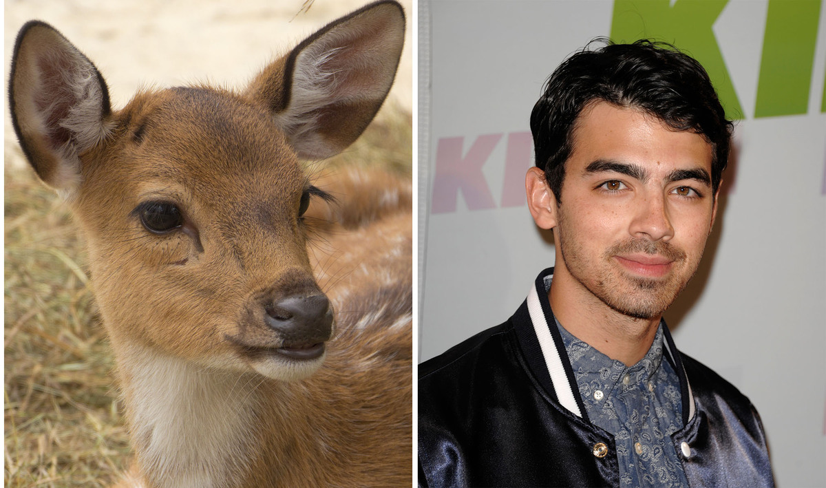24 Celebrity Resemblance in Animal Style - celebtoday.net
