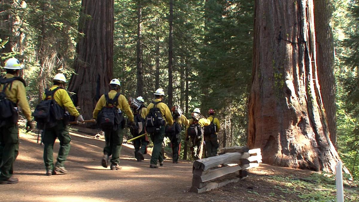 Google Wildfire Map Helps Users Track Massive Yosemite Blaze Map