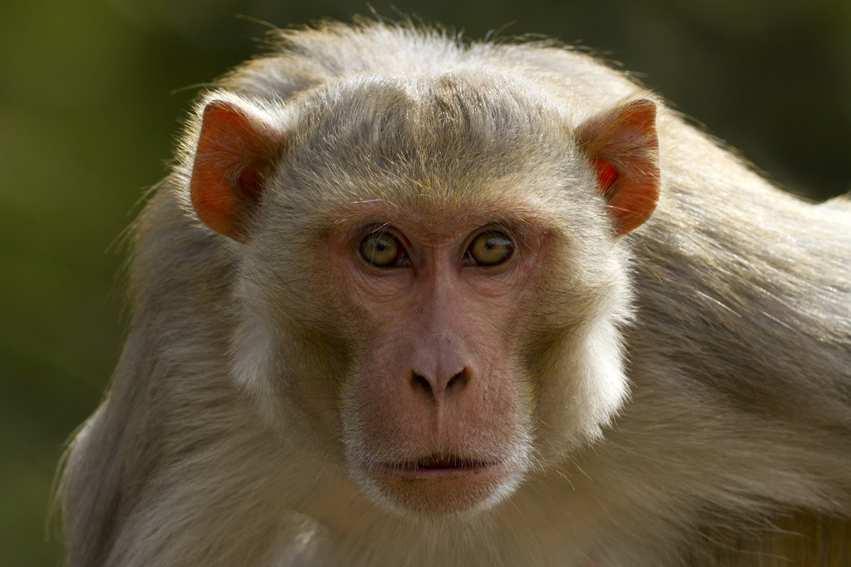 Herpes infected monkeys and nine other threats to florida photos