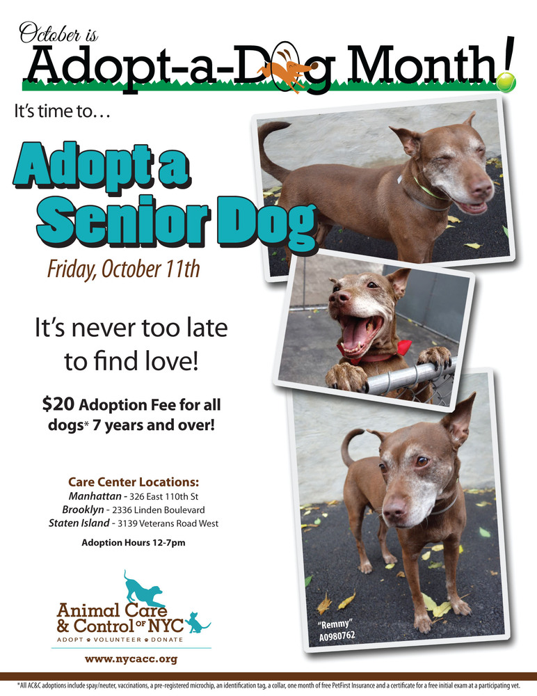 Adopt A Pet In New York City: Featured Animals For 10/11 ...